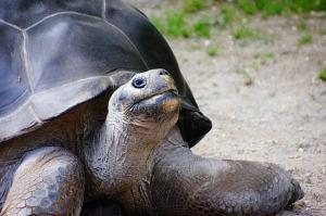 turtle-226289_640